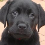 Luscious animals - mylusciouslife.com - Mabel as a puppy