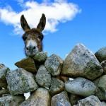 Luscious animals - mylusciouslife.com - donkey