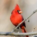 Luscious animals - mylusciouslife.com - luscious birds