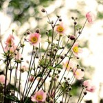 A luscious life - bloom flowers wildflowers - www.myLusciousLife.com
