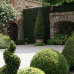 A luscious life - manicured hedges in garden