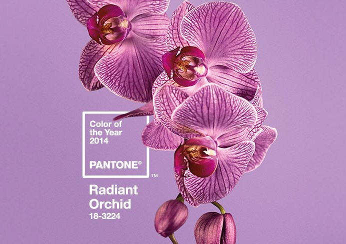 Radiant Orchid - 2014