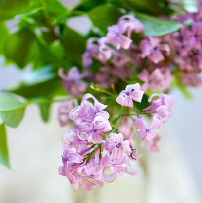 Beautiful flowers - photos