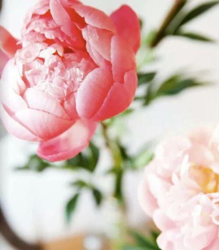 Pretty pink peonies via mylusciouslife