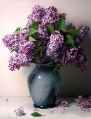 popular on pinterest beautiful lilac in a vase. Black Bedroom Furniture Sets. Home Design Ideas