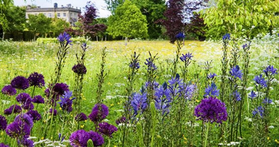 PHOTOS highgrove gardens - wild meadow - prince charles camilla country home