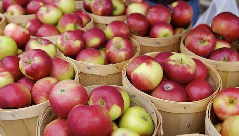 PHOTO Tubs of freshly picked apples - Wednesday Weight blog post update via mylusciouslife