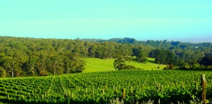 OUR LITTLE LUSCIOUS WORLD: Red Hill, Mornington Peninsula, Victoria