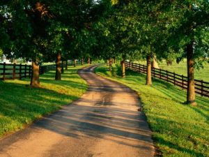 Driveways and entrances - www.myLusciousLife.com - Tree-Lined_Drive_on_Horse_Farm__Kentucky.jpg