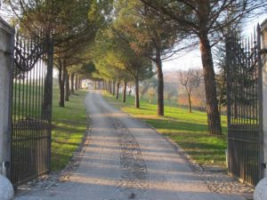 Driveways and entrances - www.myLusciousLife.com - driveway and front gates.jpg