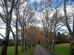 Driveways and entrances - www.myLusciousLife.com - grand-tree-lined-driveway-in-the-mid-autumn.jpg